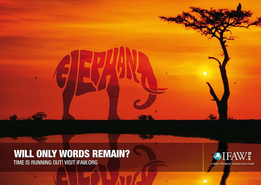 Will Only Words Remain?