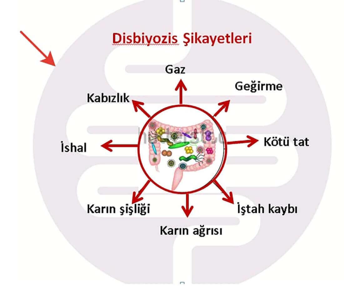 Mikrobiotanın Fonksiyonları
